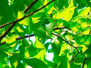 木の香りフルのログハウス達
