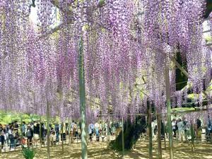 世界に誇る栃木県の花