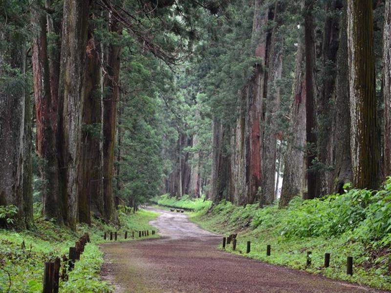 太古から人は木と共に暮す