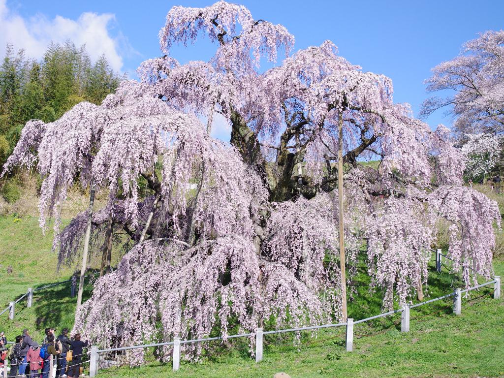 震災の福島の春