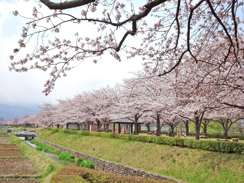 ログハウス,福島,桜