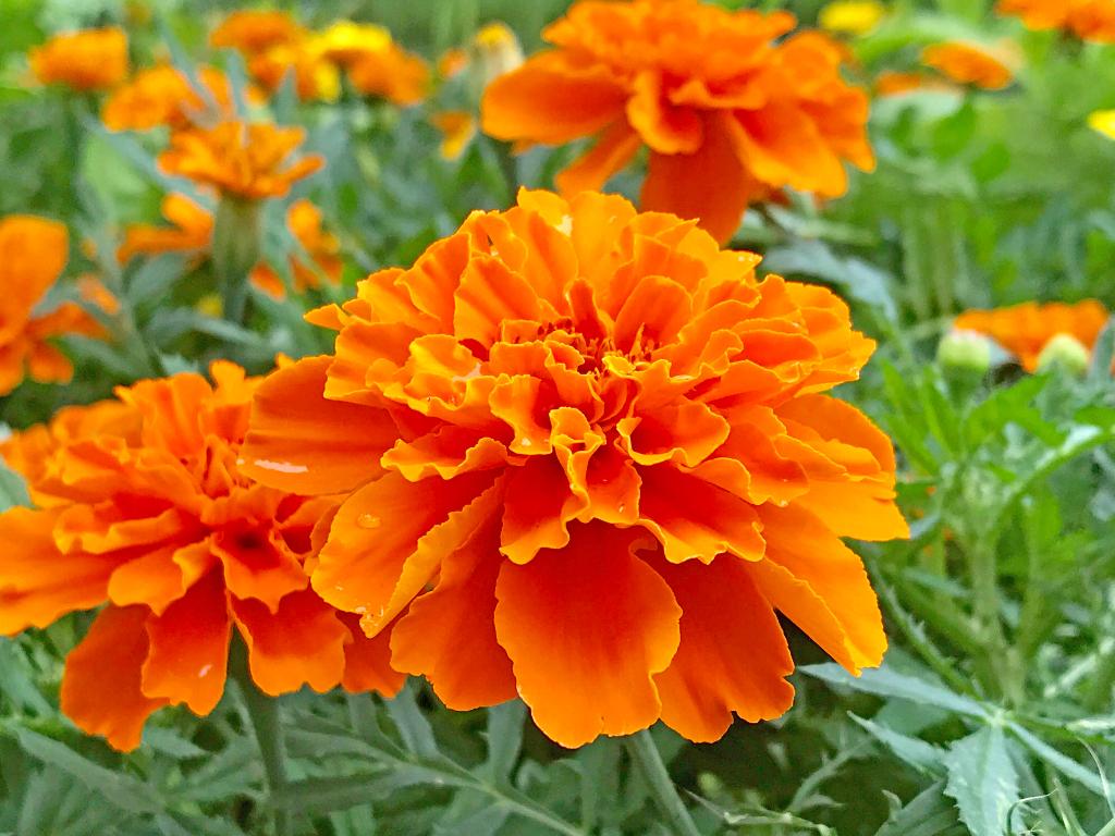 ログハウス,花