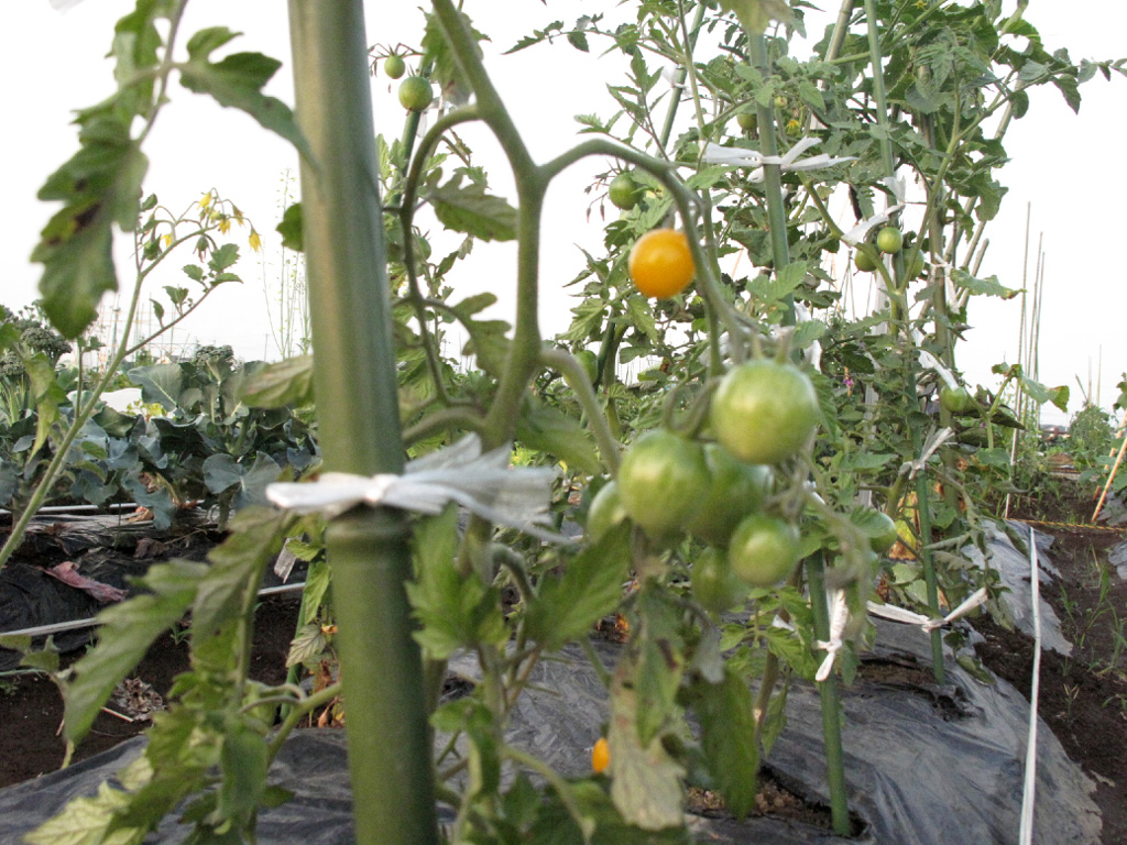 ログハウス,市民農園