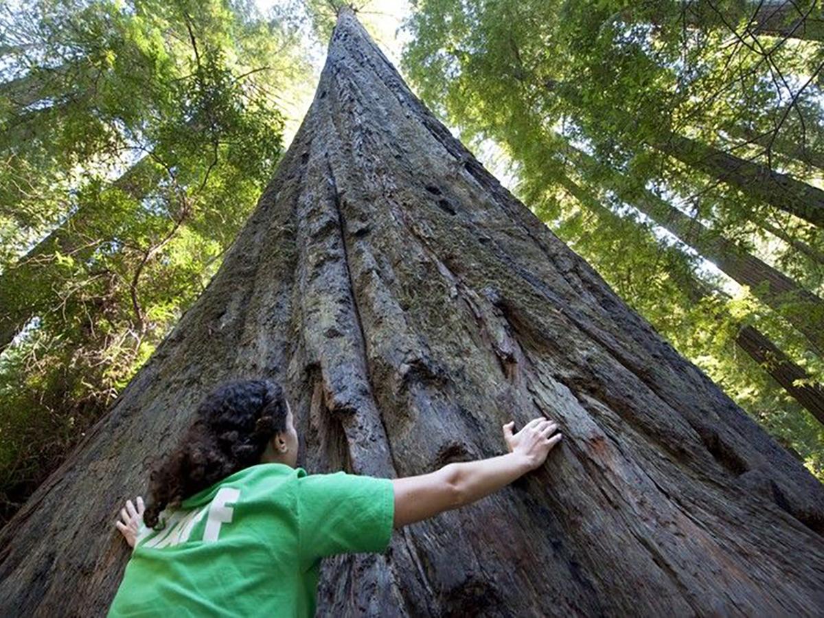 「樹」木の生活の幸せ